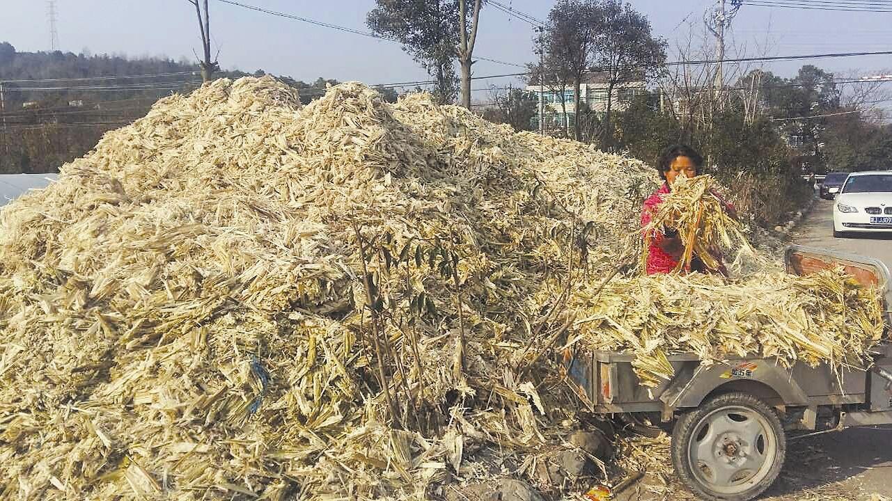 甘蔗渣有哪些可再利用用途变废为宝?